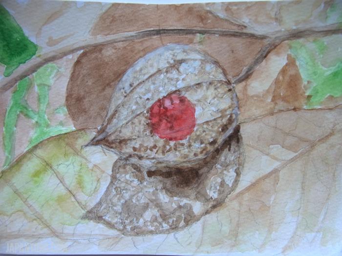 Cape-gooseberry