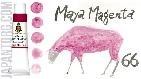 wc-66-maya-magenta